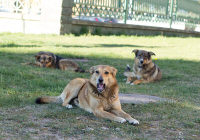 Medical Treatment for Dog Bite Injuries